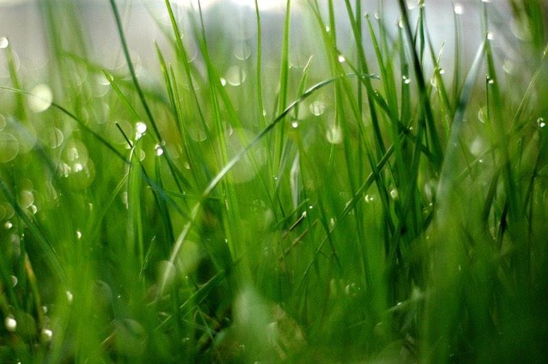 Closeup of grass with rain drops