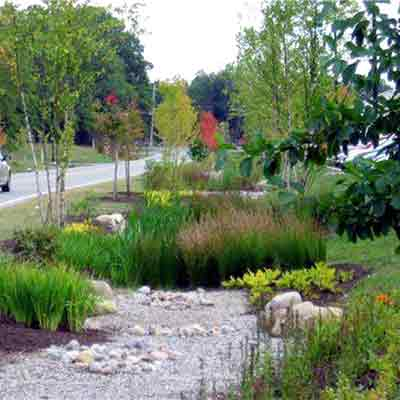 Broccolo tree lawn care we create the best looking yards in environmental workwithnaturefo